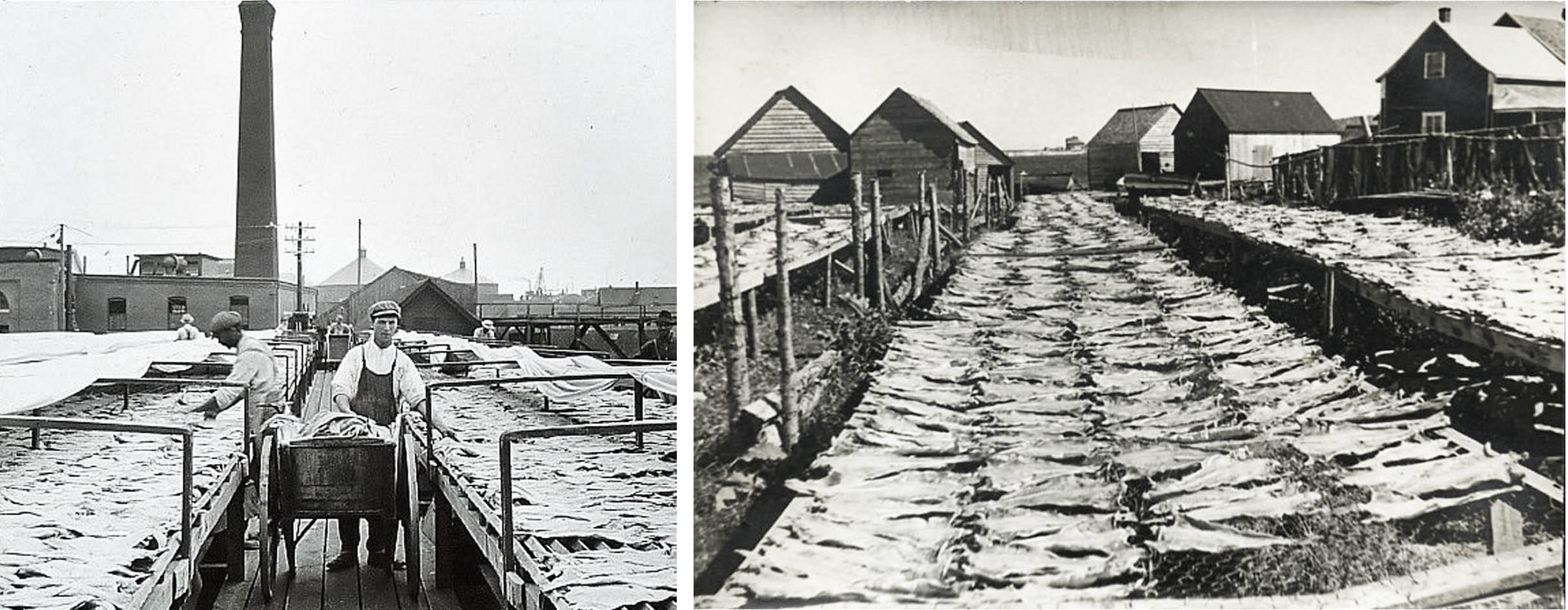 images of flake yards